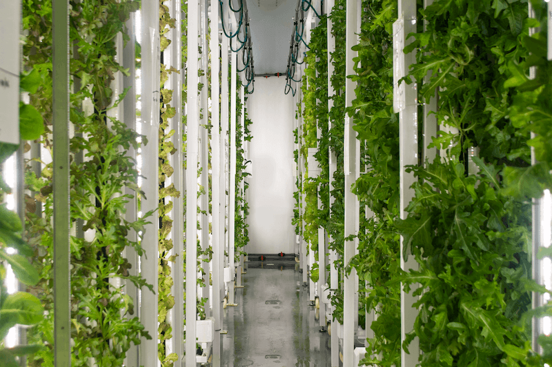 Singapore, a City of Skyscrapers and Little Land, Turns to Farming